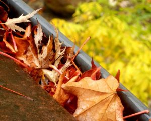 liście w rynnie