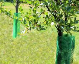 Siatka plastikowa - osłonka na drzewka