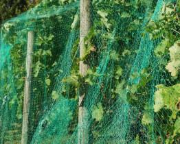 Rozkładanie siatki ochronnej na szpaki