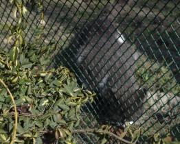 Siatka plastikowa tymczasowe ogrodzenie dla kota