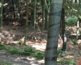 Osłonka na drzewka - taśma