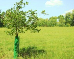 siatka-plastikowa-osłonka-drzewo