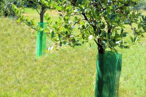 Osłonięte siatką drzewko